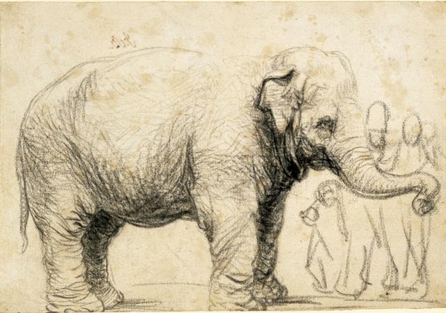 """""""An Elephant"""" © 1637 Rembrandt van Rijn"""