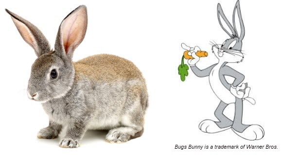 Compare a Realistic and Cartoon Rabbit
